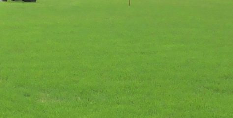 We Need N81 Million To Cut Abuja Stadium Grass – Youth and Sports Minister.